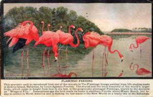 Miami Beach 100 Years of Ecotourism